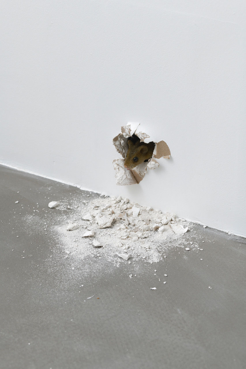 RYAN GANDER gb agency